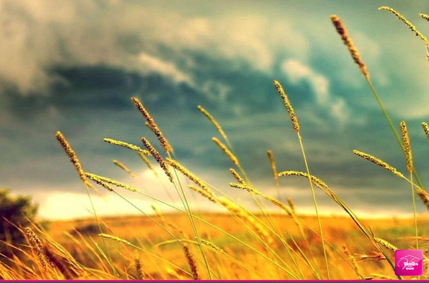ménage bio et respect de l'environnement